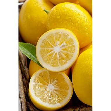 Dwarf Meyer Lemon (Orange Hybrid) Ever Bearing Aromatic Fruit Citrus Tree Plant (Cant Ship AZ CA LA TX), 1 Gallon (4in CitraPot)