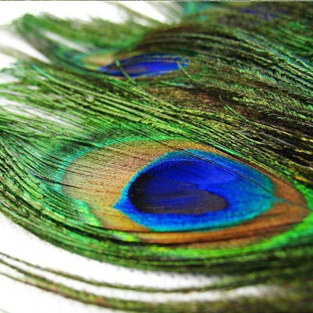 Vivian Beautiful Natural Peacock Feathers Eye Peacock Tail Feathers 10-12 Pack of 20pcs