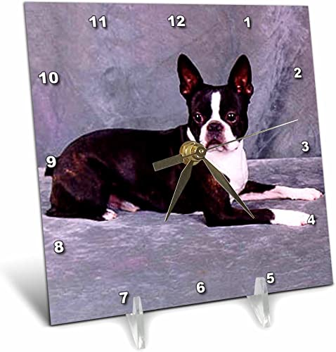 3dRose Dogs Boston Terrier – Boston Terrier – 6×6 Desk Clock dc_268_1