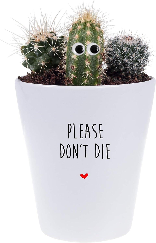 Desk Plant Mrs Bees Emporium Please Dont Die Plant Pot Office Secret Santa Funny Xmas Present With Heart