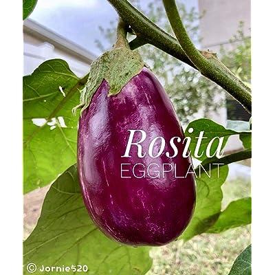 Rare 2020 Puerto Rico Heirloom Rosita Eggplant 10 Seeds Non-Bitter : Garden & Outdoor