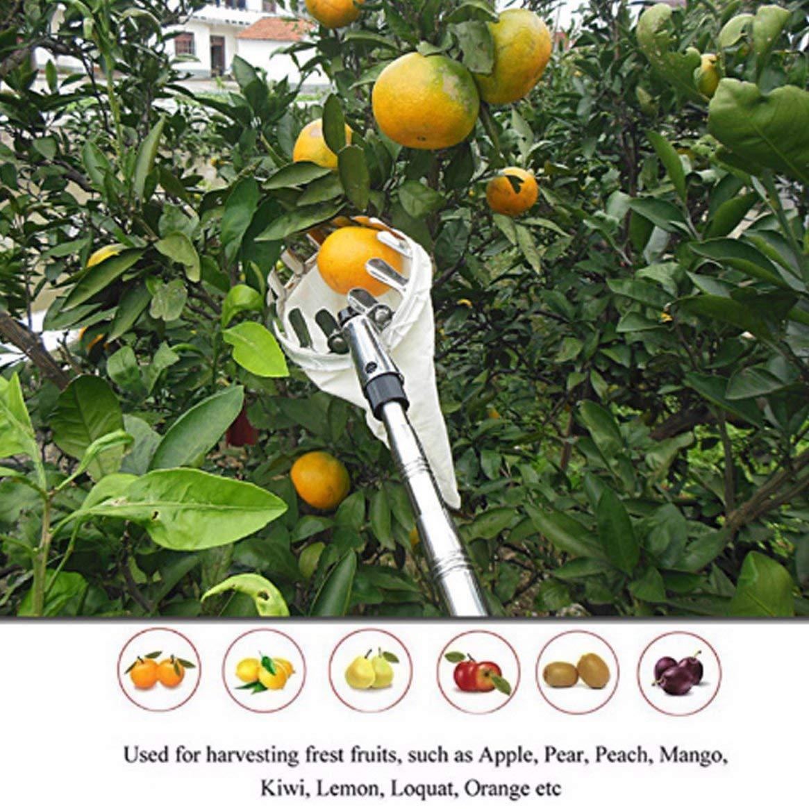 Recogedor de frutas metálicas Dispositivo de recolección de frutas a gran altura Dispositivo de recolección de frutas portátil Herramientas de hardware de ...