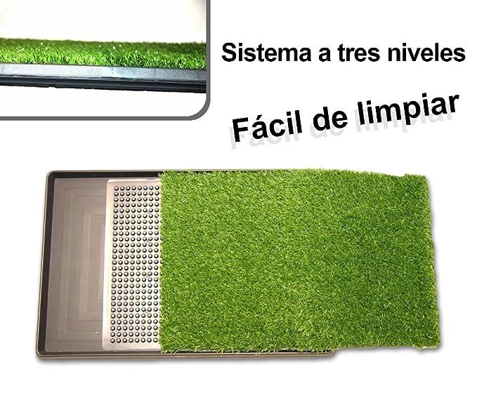 Inodoro bandeja de césped artificial educación perros POTTY PATCH 68x43x5cm: Amazon.es: Deportes y aire libre