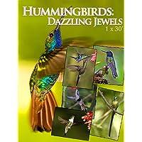 Hummingbirds: Dazzling Jewels