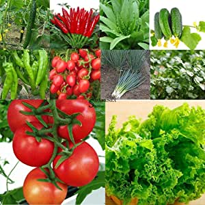 Organic Pepper Seeds Versatile Vegetable 20 Seeds ANAHEIM CHILI Hot!!!