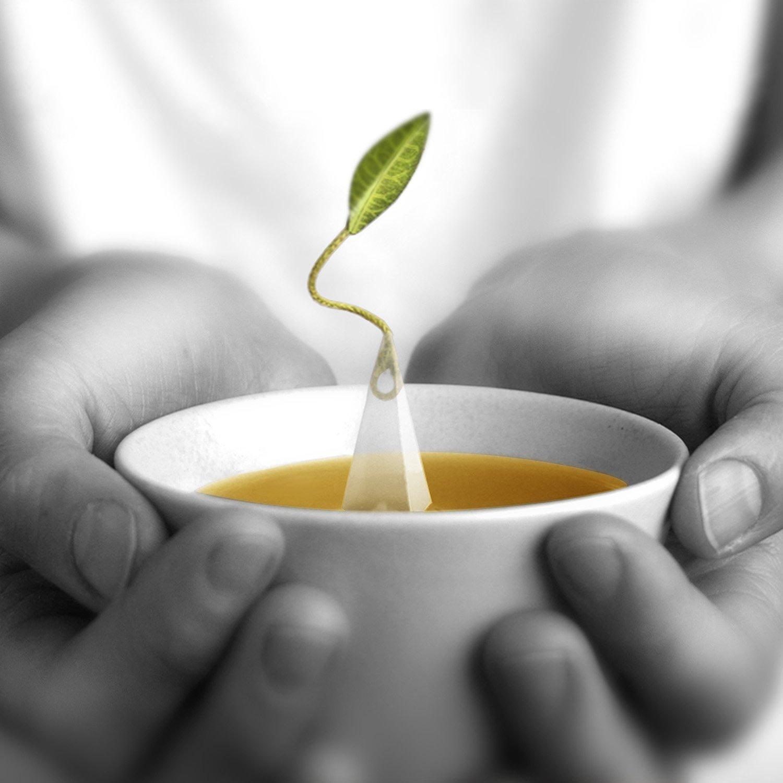 Tea Forté ONE POUND POUCH, Loose Bulk Tea - Formosa Oolong Oolong Tea by Tea Forte (Image #5)
