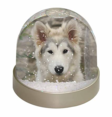 Amazon Com A Pretty Siberian Husky Puppy Dog Snow Dome Globe