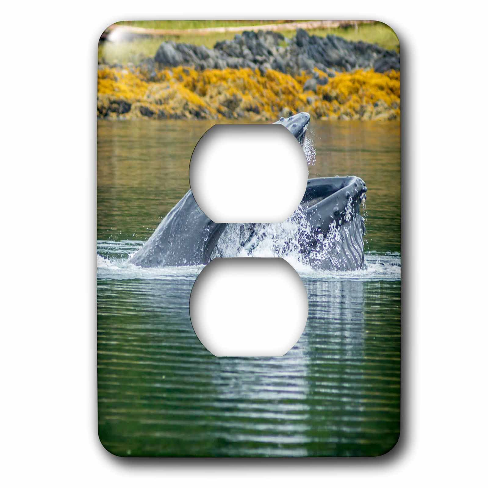 3dRose Danita Delimont - Whales - USA, Alaska, Tongass National Forest. Humpback whale lunge feeds. - Light Switch Covers - 2 plug outlet cover (lsp_278363_6)