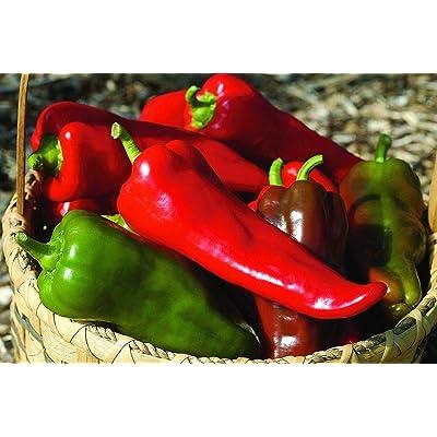 Carmen Hybrid Sweet Pepper Seeds (20 Seed Pack) : Garden & Outdoor