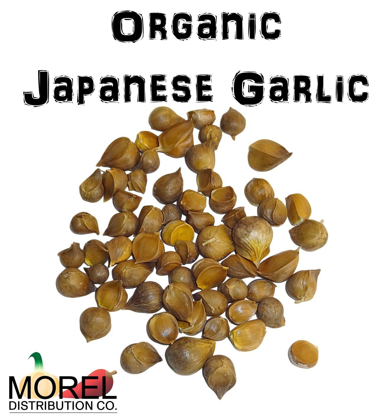 Organic Japanese Garlic (AJO Japones Organico) 8 oz and 1 Lb!! (8 oz)