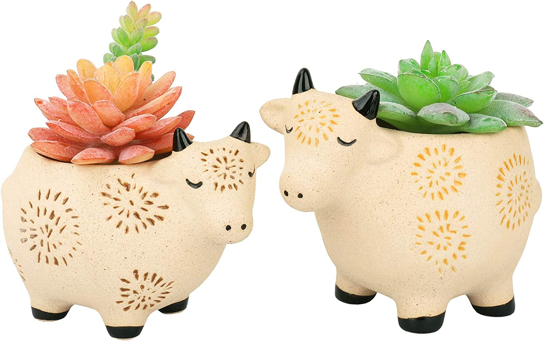 Ceramic Succulent Gift,Crassula Ovata Jade,Ceramic Bird,Bird Planter,Ceramic Animal Planter,Succulent Gift,Succulent Lover,Plant