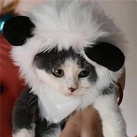 DWH FOREVER Disfraz de Gato Melena de león Peluca Sombrero Ropa con Orejas Halloween Disfraces para