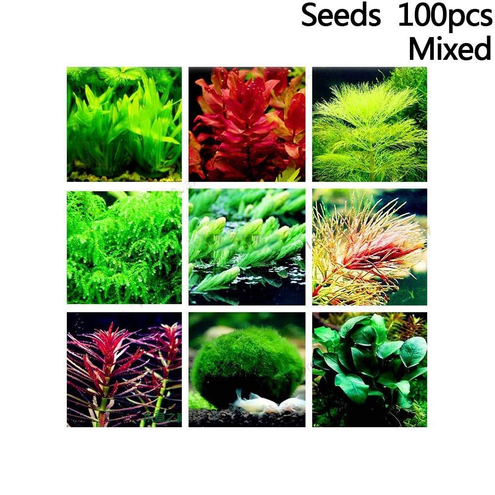 shen chou 5 Pack Water Plant Seeds Water Grass Seed Tall Hairgrass Buffalo Seeds Easy Aquatic Live Grow Plants Fish Tank Decoration Landscape Ornament Aquarium Decor Foreground