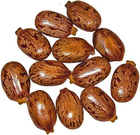 Giant Zanzibar Castor Bean 7 Seeds -Ricinus- Green Leaf Garden, Lawn,  Supply, Maintenance: Amazon.ca: Patio, Lawn & Garden