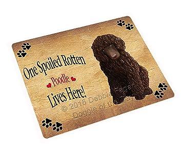Amazon.com: Caniche café Spoiled Rotten perro arte retrato ...