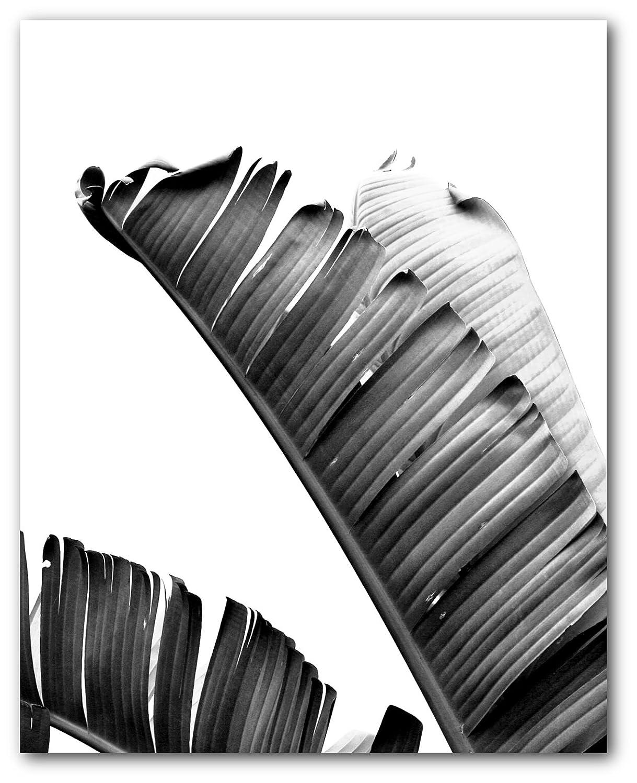 Amazon com banana leaf print black and white palm leaf 8 x 10 inches unframed handmade