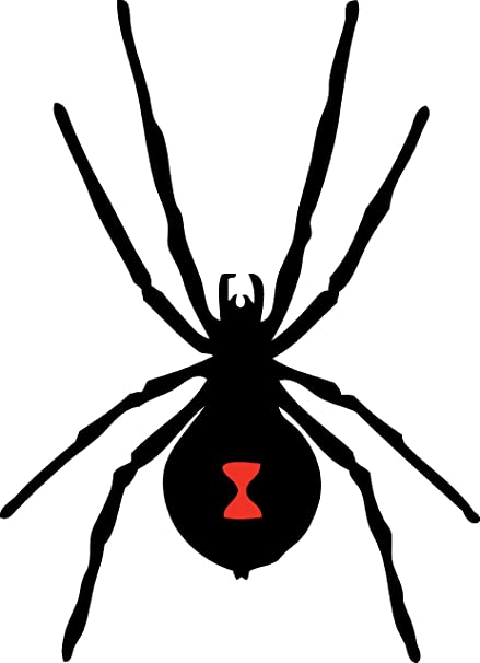 amazon com black widow spider wall decal sticker 1 decal stickers
