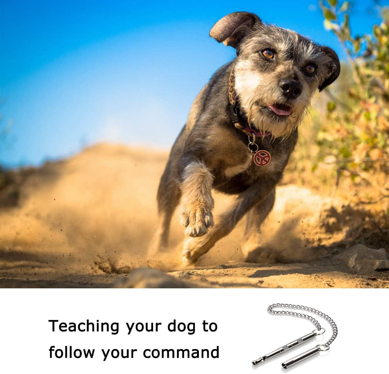 ghdonat.com Professional Dog Training Tools to Stop Barking ...