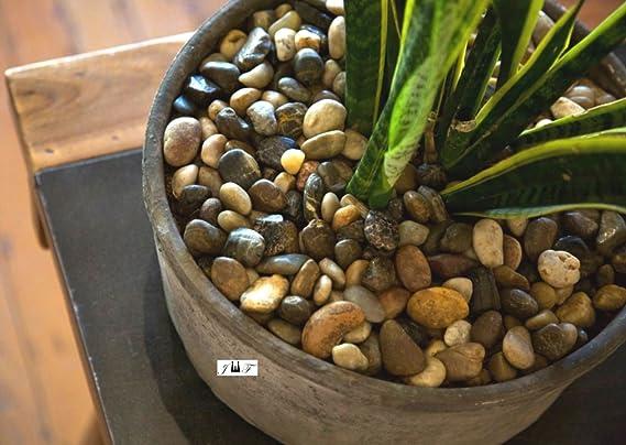 ... Piedras Color mezclado para Pebbles, al aire libre decorativo piedras naturales, grava, jarrón de regalo, cristal, Cactus maceta: Amazon.es: Jardín