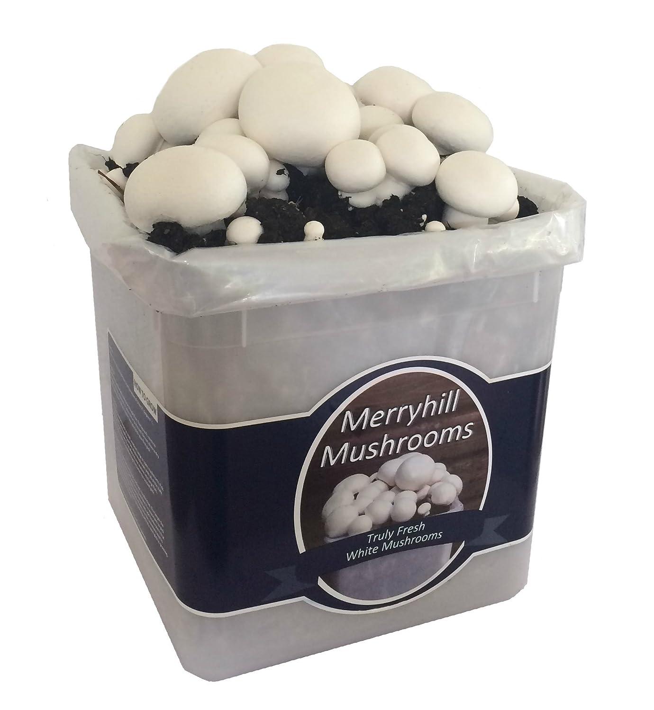 Merryhill Mushrooms - Pre Growing Grow Your Own Fresh White Mushroom kit (Single White)