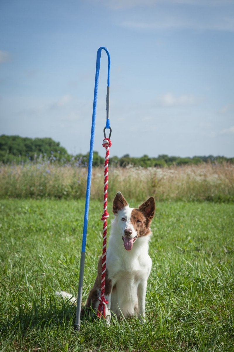 Tether Tug Large - Interactive Dog Toy - Outdoor Dog Toys Large