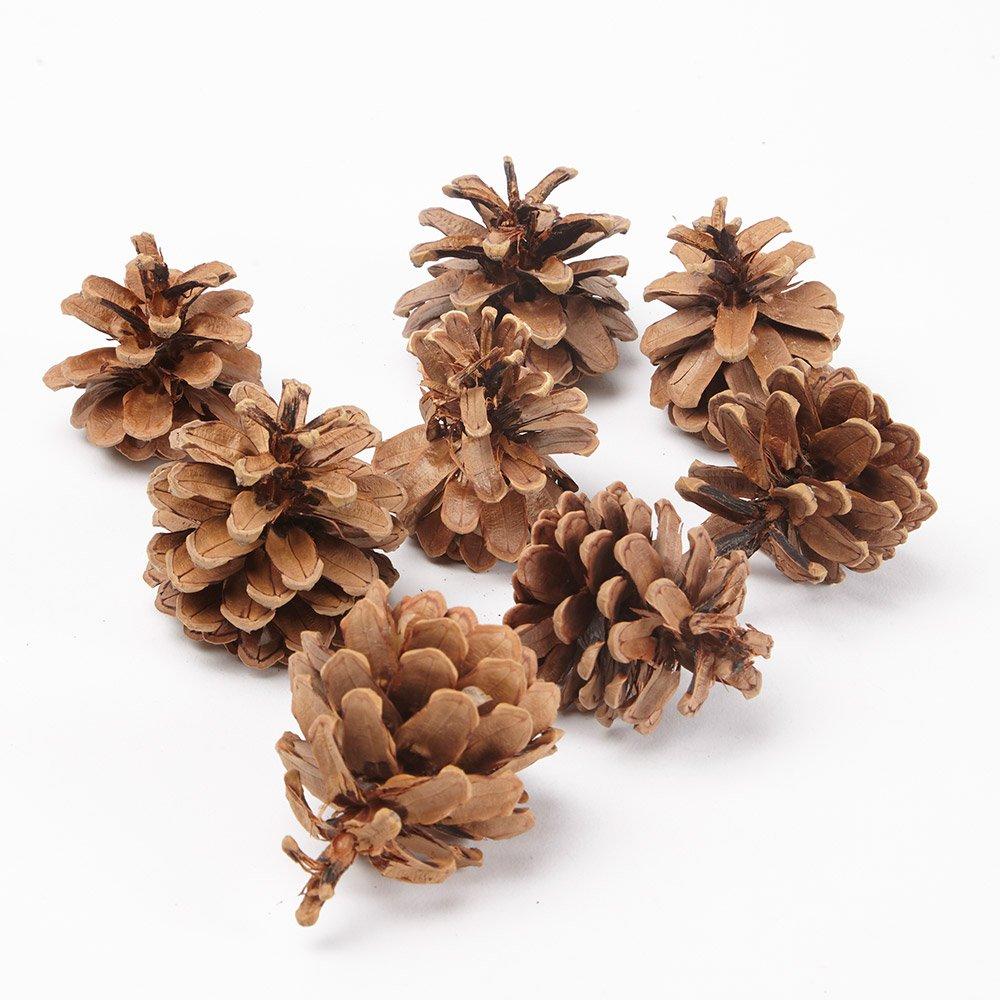 1kg (50) Austriaca Florist Fir Pine Cones Natural The Milford Collection 7135
