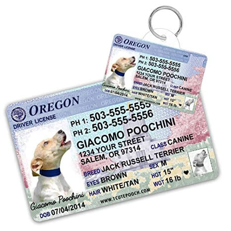 Cat Tag Id Cats Tags For com License And Dog Pet Custom