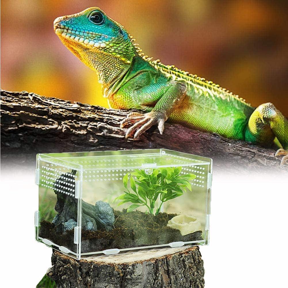 Caja de Alimentación de Insectos, 20X12X12cm Acrílico Transparente Estuche de Cría de Reptiles para Spide, Lagartija, Escorpión, Ciempiés, Rana cornuda, Escarabajo