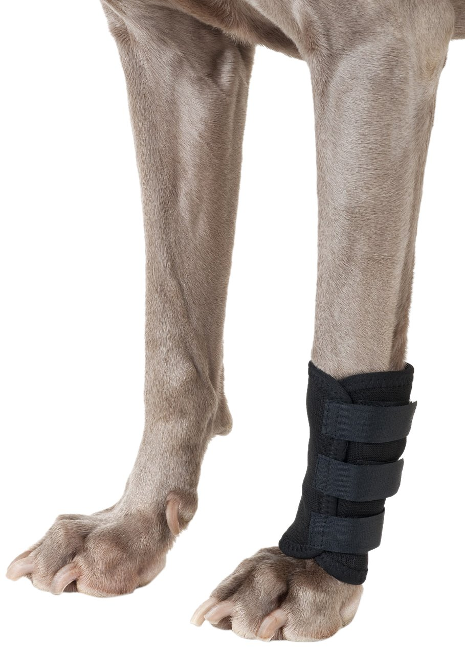 Back on Track 7-Inch by 5.5-Inch Therapeutic Dog Front Leg Wrap with 3 Adjustable Velcro Straps, Large