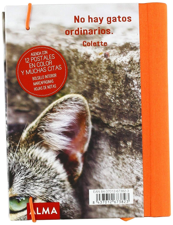 Amazon.com : Alma Cats Diary : Office Products