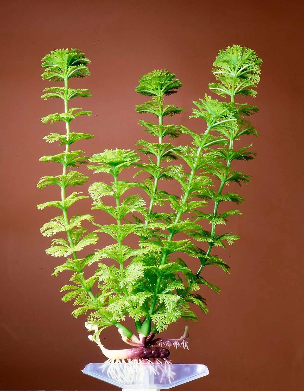 10 inch Aquarium Décor Plastic Plants (Ambulia (Green), 10 inch)