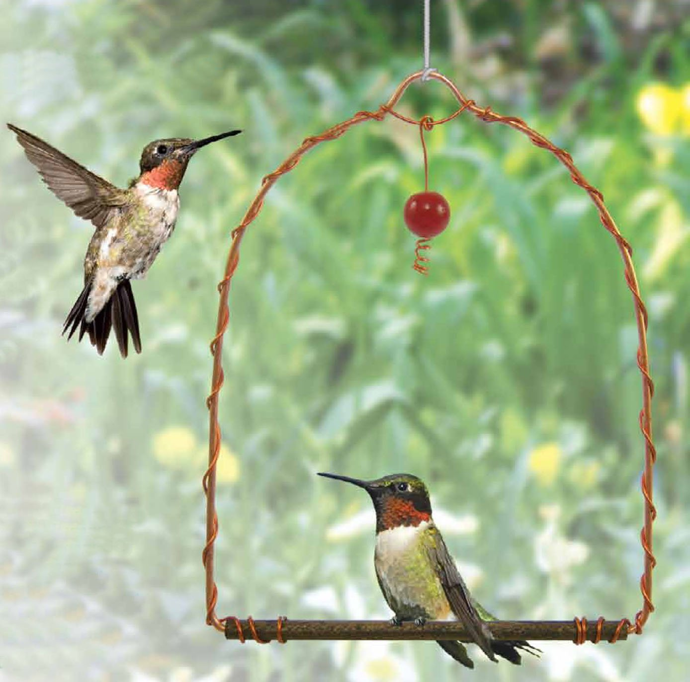 51266b0ffc3a4 Amazon.com   Songbird Essentials SEHHHUMS Copper Hummingbird Swing (Set of  1)   Wild Bird Feeders   Garden   Outdoor