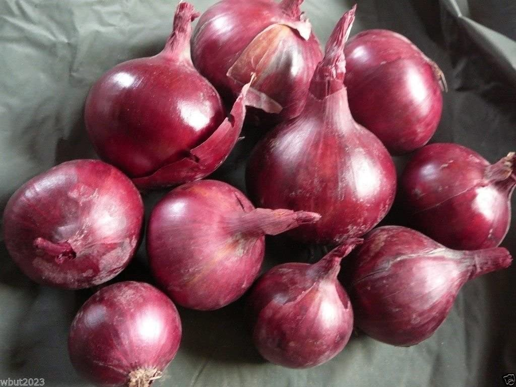 Red Burgundy Onion SeedsOrganic Plant Vegetable Garden Scallion Seed for 2021