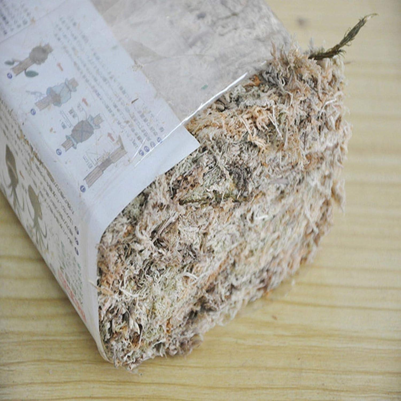 orqu/ídeas Musgo Sphagnum para bons/áis sustrato de agua para orqu/ídeas musgo seco secado phalaenopsis 6 l musgo esphagnum