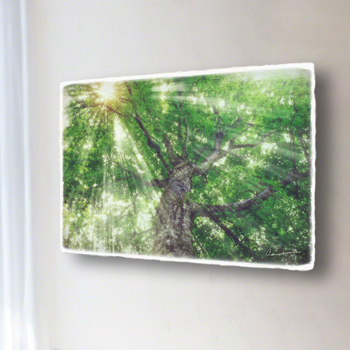 和紙 アートパネル 「木漏れ日と白神山地の新緑のブナのマザーツリー」 (68x45cm) 絵 絵画 壁掛け 壁飾り インテリア アート B0786HHXDV 16.アートパネル(長辺68cm) 48000円|木漏れ日と白神山地の新緑のブナのマザーツリー 木漏れ日と白神山地の新緑のブナのマザーツリー 16.アートパネル(長辺68cm) 48000円