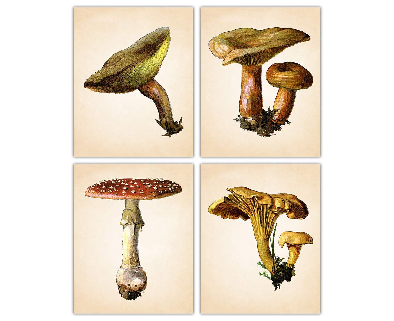 Vintage Mushrooms Wall Art Prints - Set of Four (8x10) Photos Unframed Make Great Room Wall Decor Gift Idea Under $20