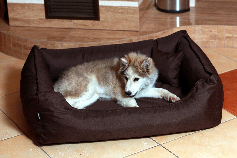 Cama para perro DONALD ORTO Vital Anti-pelo 100cm L verde oliva Revestimiento de teflón con Colchón de confort: Amazon.es: Productos para mascotas