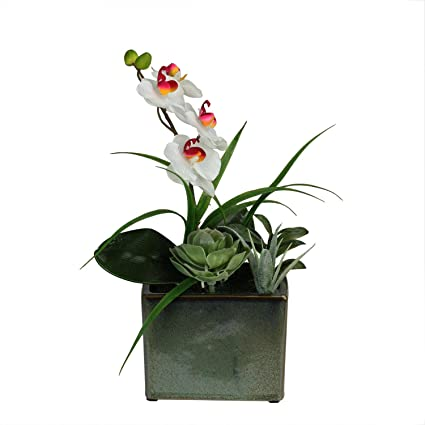 Amazon northlight spring time easter orchid and succulents northlight spring time easter orchid and succulents artificial floral arrangement 12quot mightylinksfo