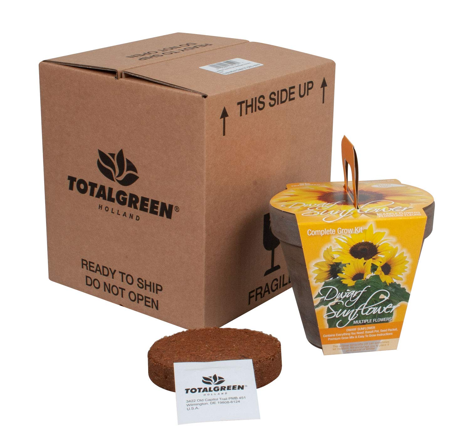 Quality Sunflower Grow Kit | Grow Your Own Unique Dwarf Sunflower from Seed in Just A Few Weeks | Unique Basalt Pot, Non-GMO Mother's Day Gardening Kit with Easy Instructions | by TotalGreen Holland (Image #5)