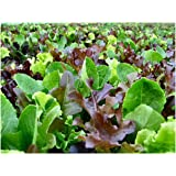 Premier Seeds Direct ORG063 Lettuce Mesclun Mix Organic Seeds (Pack of 1000)