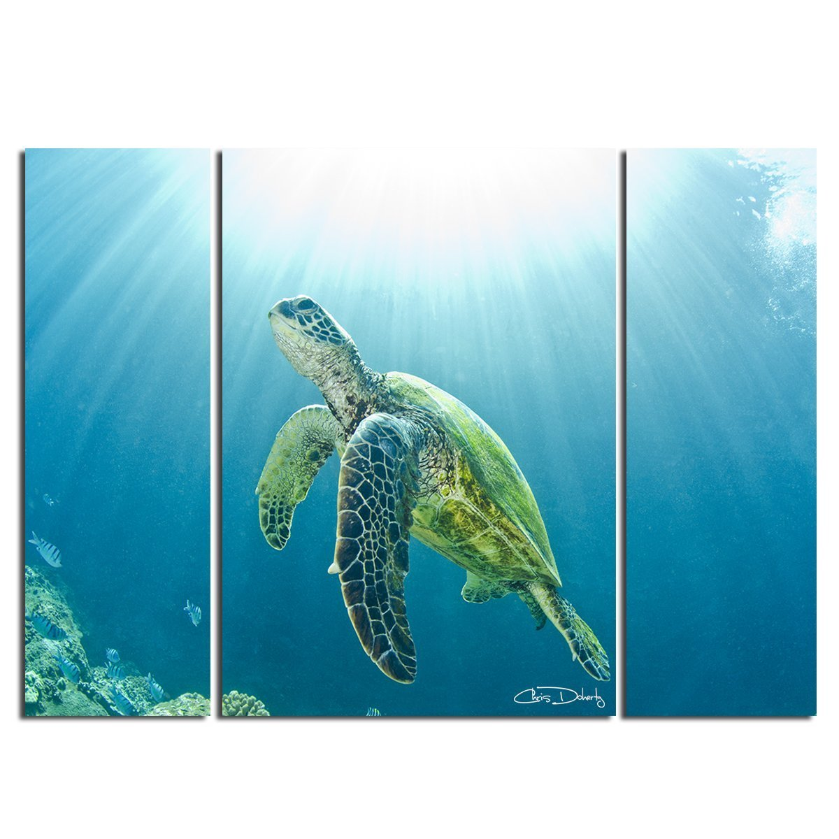 30 x 40 Blue Overall Overall Ready2HangArt Sea Turtle Realism Contemporary Photograph Wall Art Print 30 x 40 DSC9395-GWC3040TP