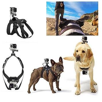 onchoice arnés del perro Cinturón de pecho fijar para GoPro, Ohne Fuß: Amazon.es: Deportes y aire libre