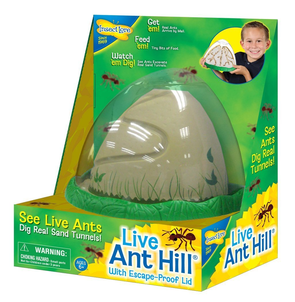 Ant Farm Viewing Habitat - Escape Proof Ant Hill Kit Includes Sand And Activity Book by Insect Lore