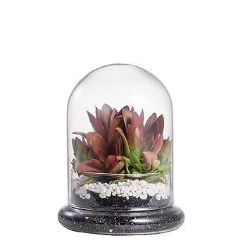 NCYP Rund Klar Deko Glas Terrarium Cloche Glaskuppel Display Case ...
