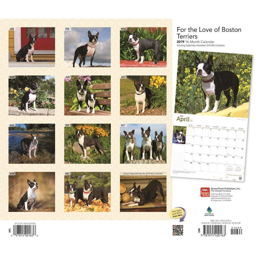 Boston Terriers Calendar 2019 Set - Deluxe 2019 Boston Terriers Wall  Calendar with Over 100 Calendar Stickers (Boston Terriers Gifts, Office  Supplies)