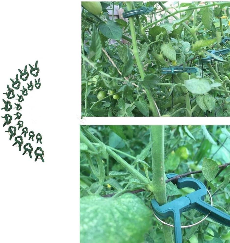 tiges parterres de fleurs SE d/évelopper Droit vignes Dproptel 80/Lot r/éutilisable de clips de jardin Vigne Fleur Clips pour serre jardinage prenant en charge tiges