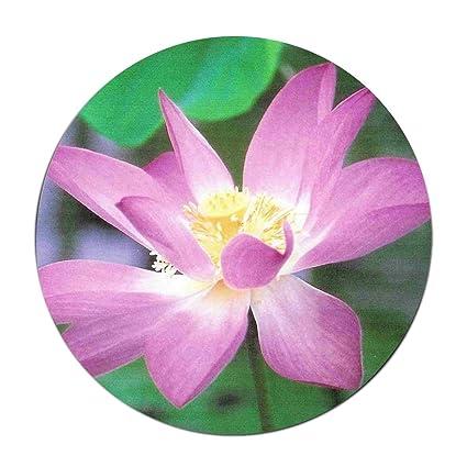 Amazoncom Jonhbkd Lotus Flower Meaning Modern Coral Fleece Rugs