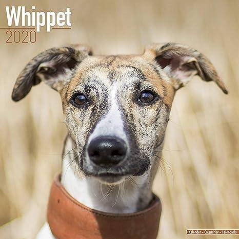 Euro 2020 Nice Calendrier.Whippet Calendar 2020 Dog Breed Calendar Wall Calendar 2019 2020