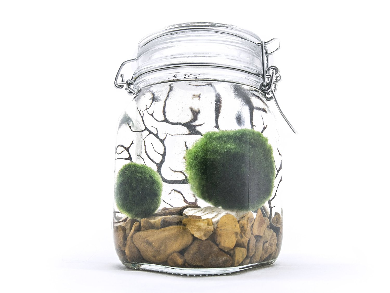 Aquatic Arts Terrarium Kit With Live Marimo Moss Balls - Large Glass Bottle Starter Set for Easy Indoor Plant Terrariums - Natural Centerpiece for Home Decor/Unique Gift Ideas by by Aquatic Arts