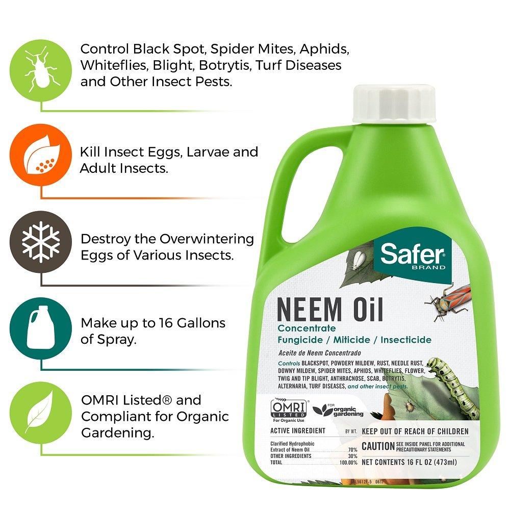 Amazon Safer Brand Neem Oil Concentrate Green Garden Outdoor